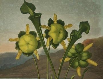 3-plantas-recorte